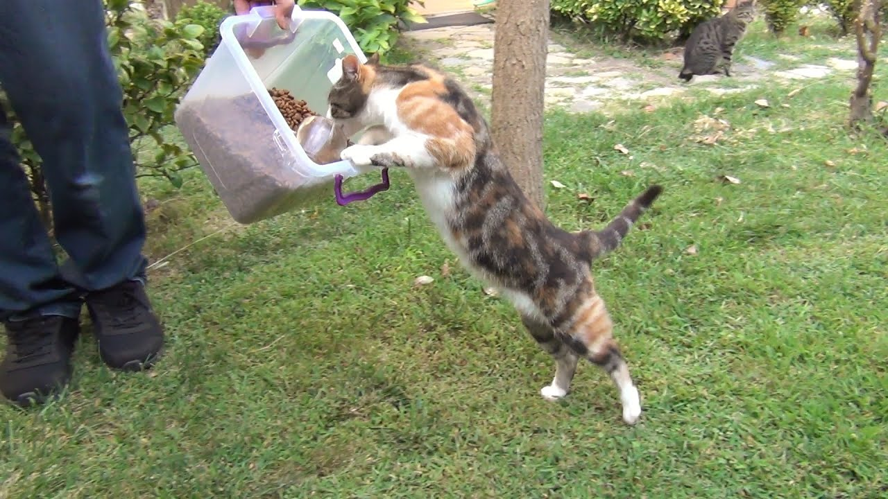 Nothing can stand between a cat and her food!