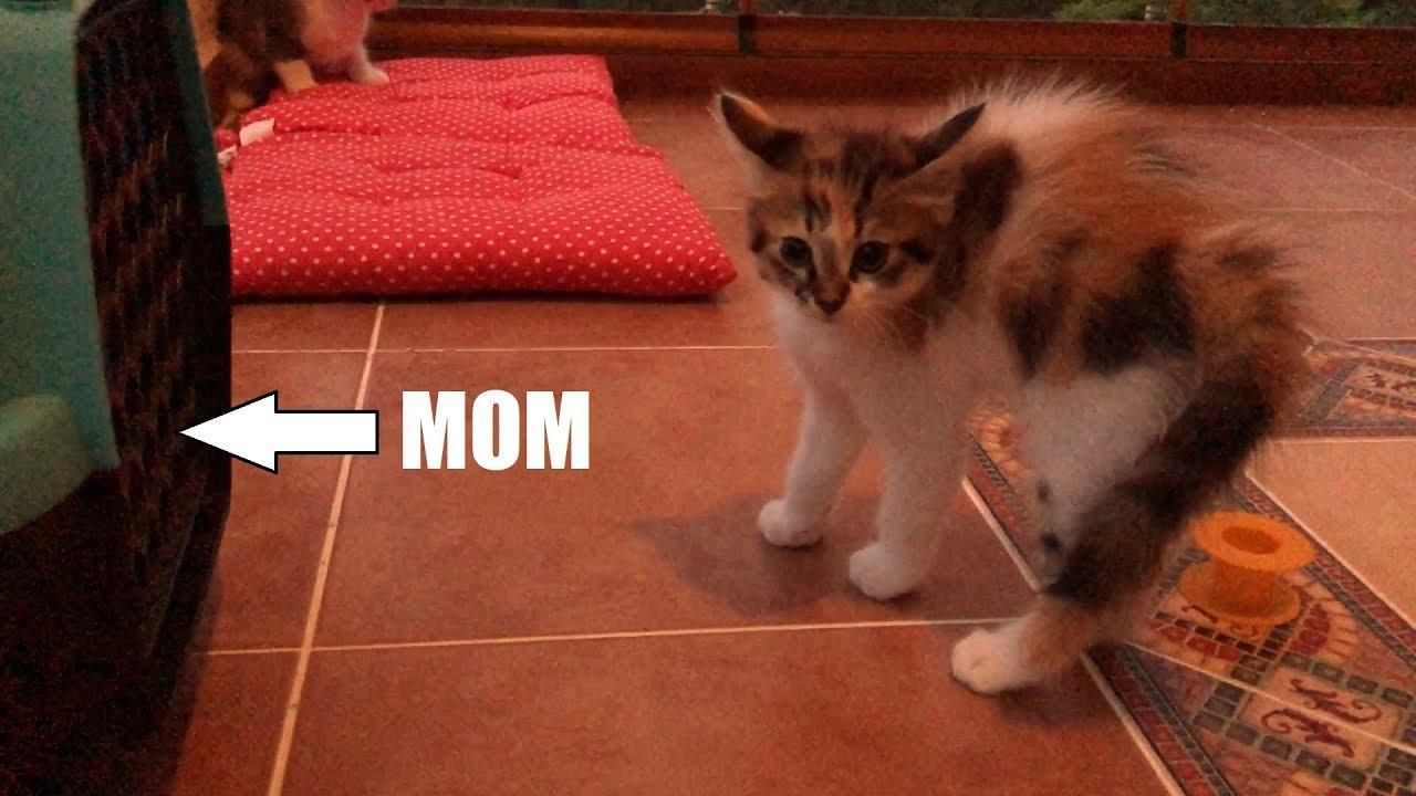 Kittens don't recognise mother cat after vet visit