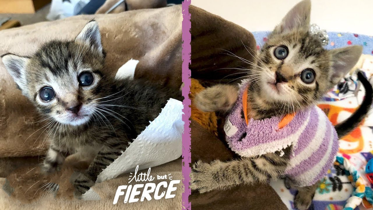 Kitten gets through tough times and becomes a really playful fur-ball