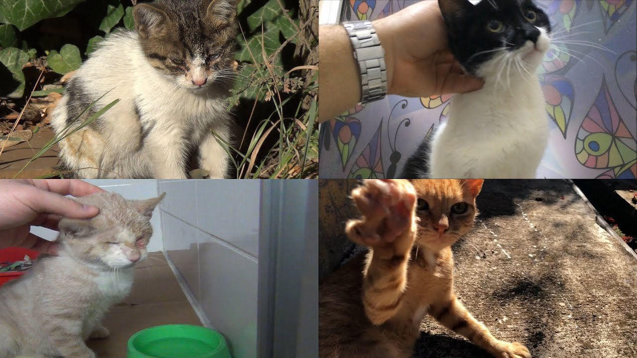 The wonderful transformation of 4 rescued cats