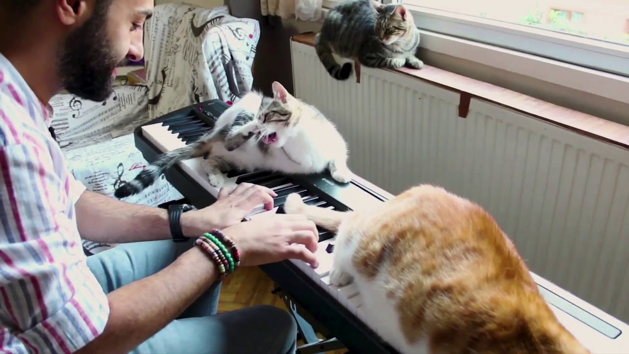 Playing Some Music For His Cats