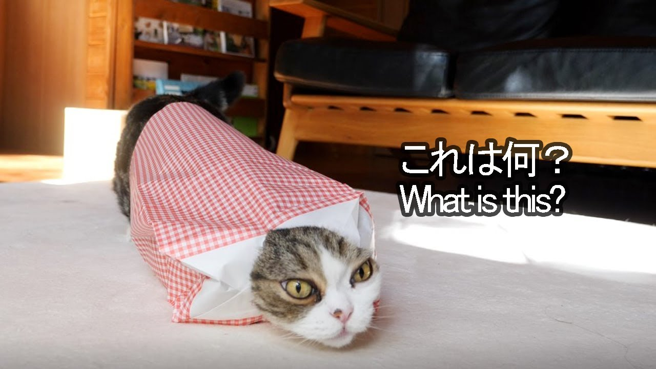 Maru And The Paper Bag