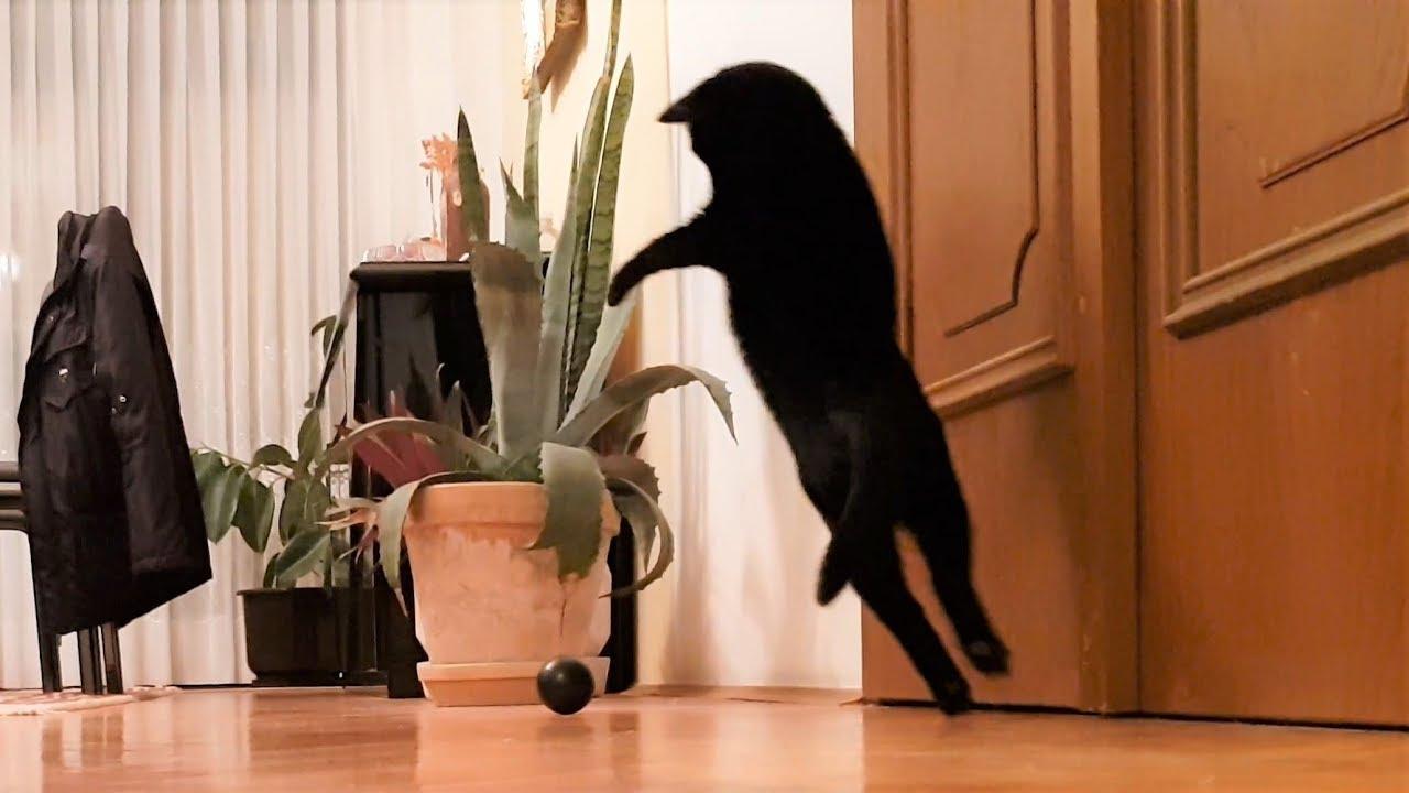 A Very Playful Cat
