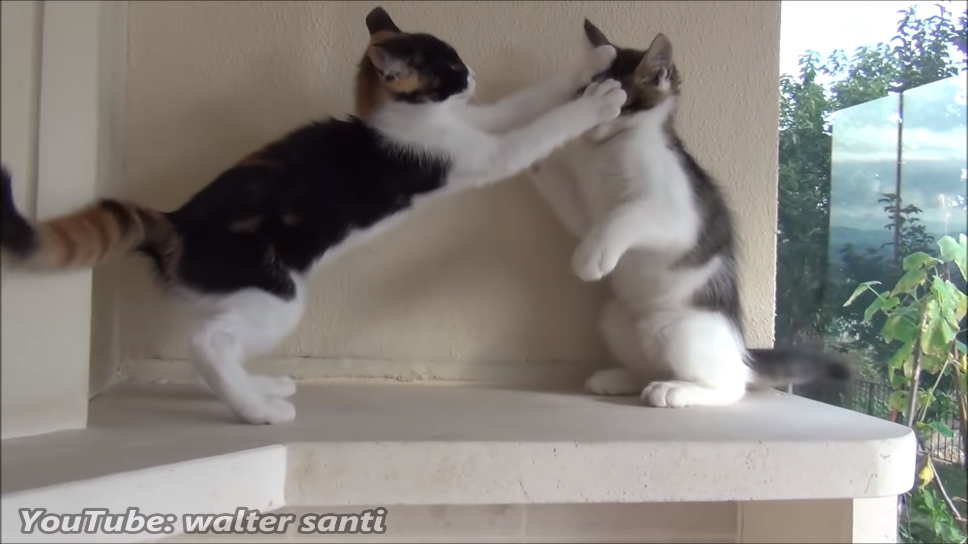 The most playful kittens in the world