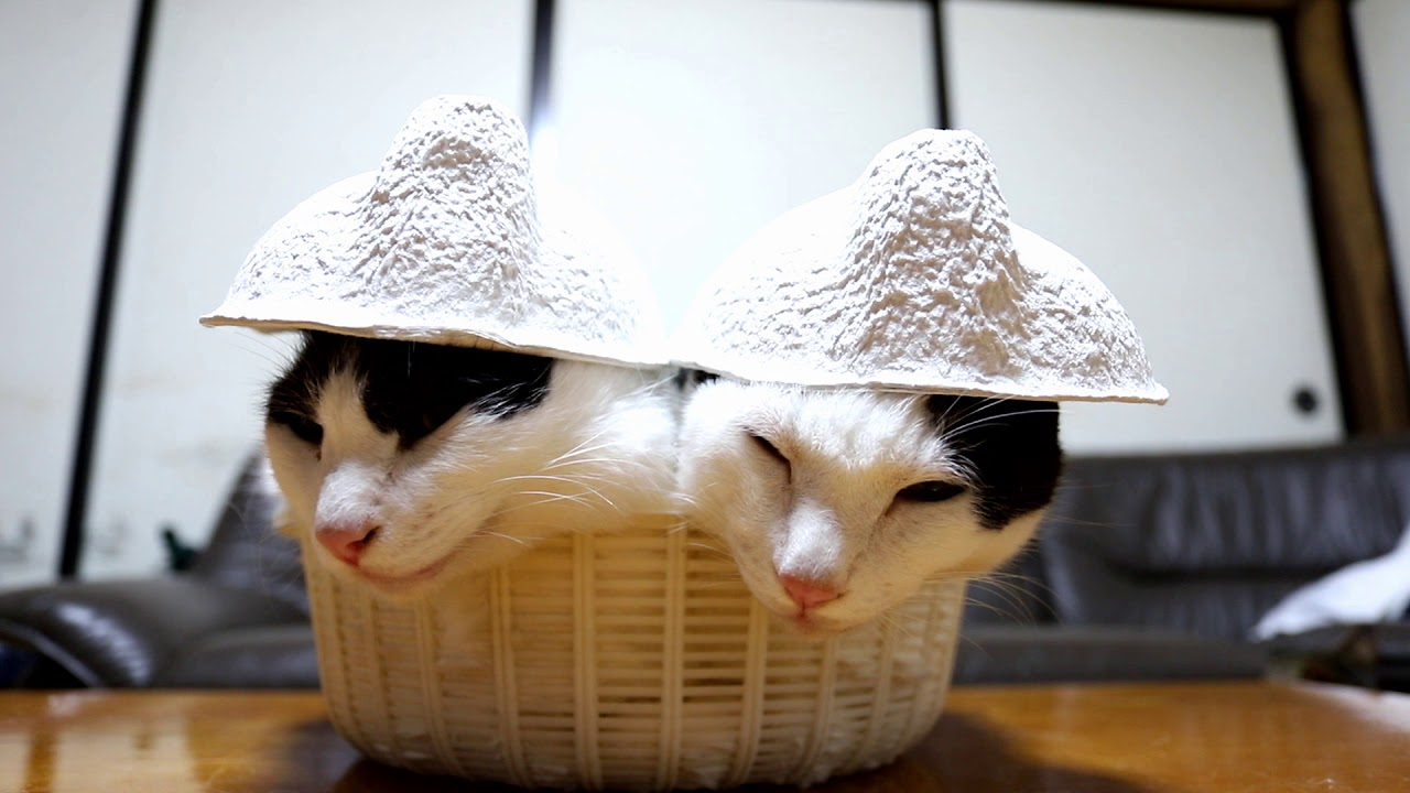 Cute Cats Wearing Hats
