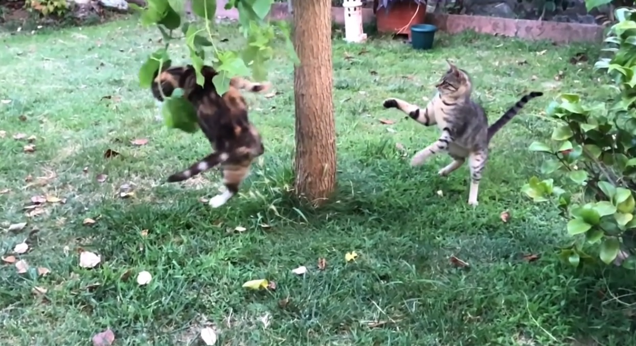 Funny Cats In The Garden