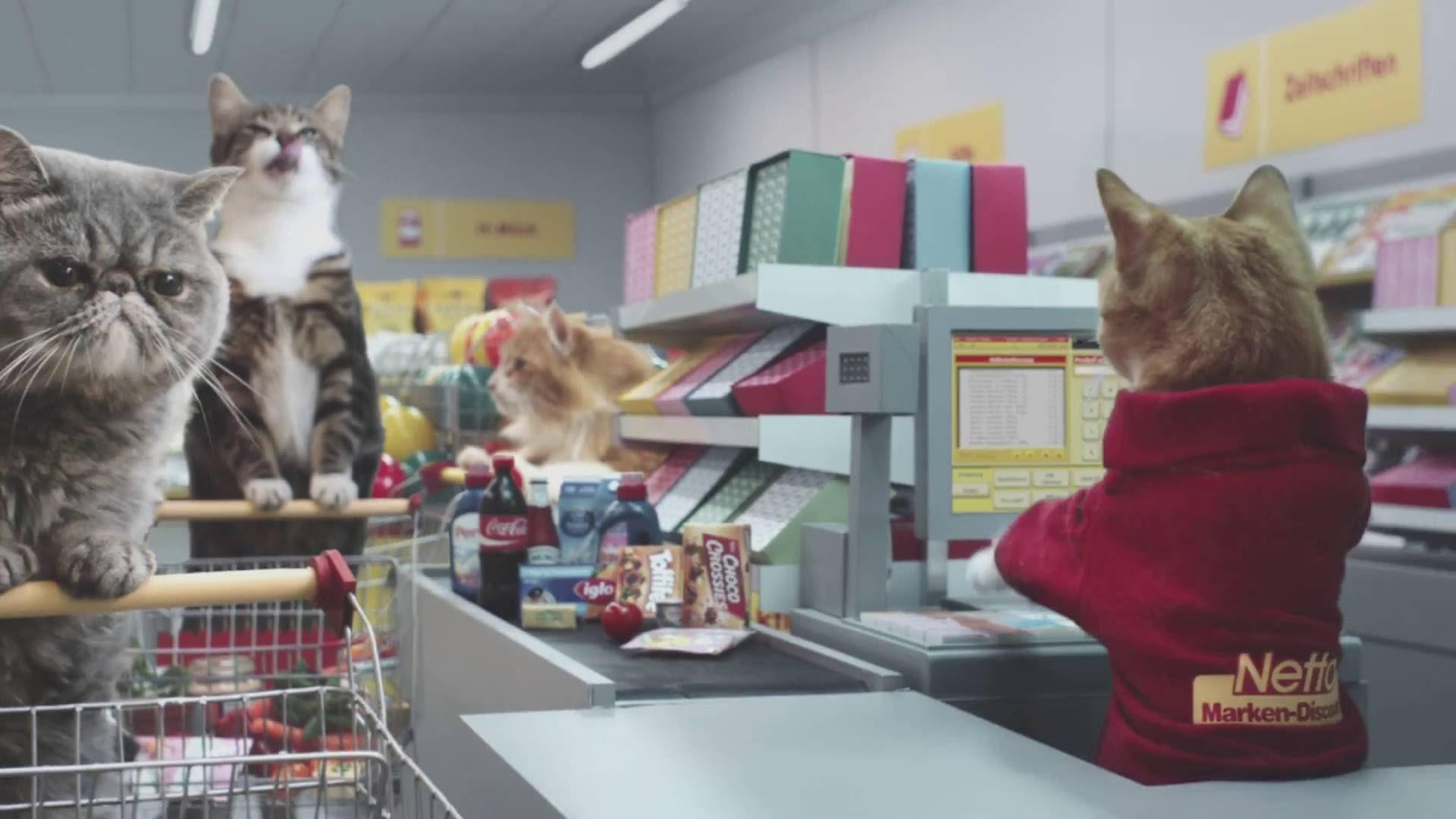 Cats at supermarket
