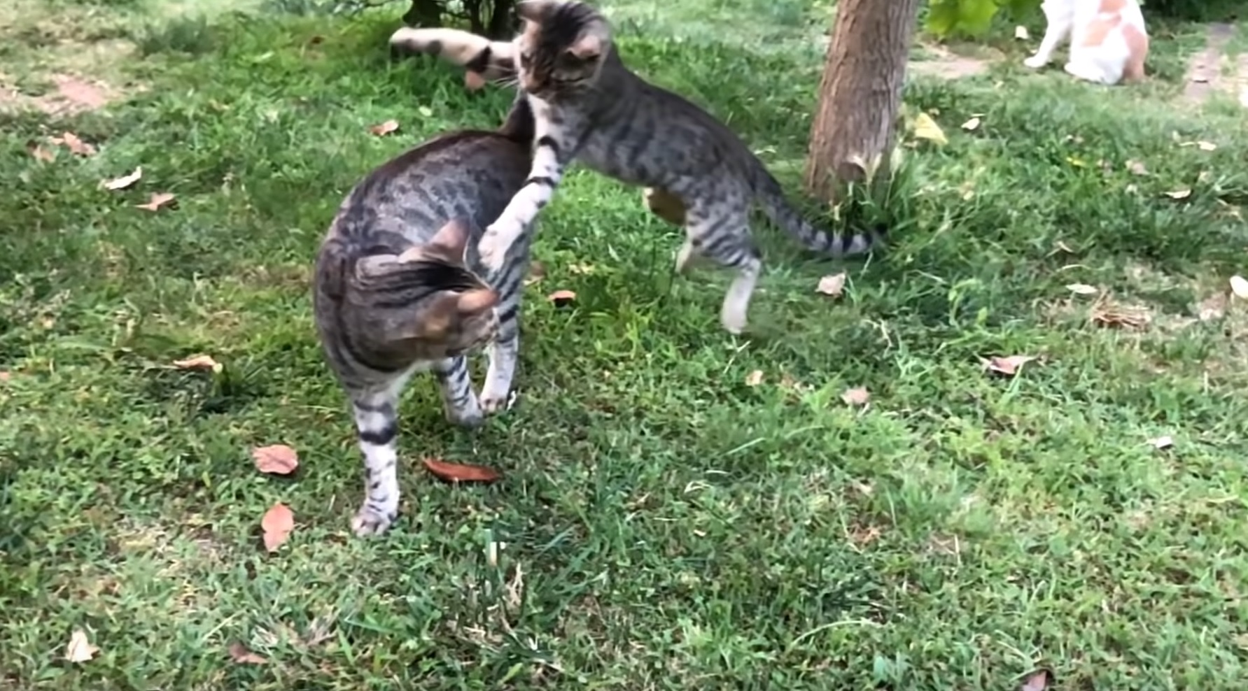 Kitty Finds New Best Friend
