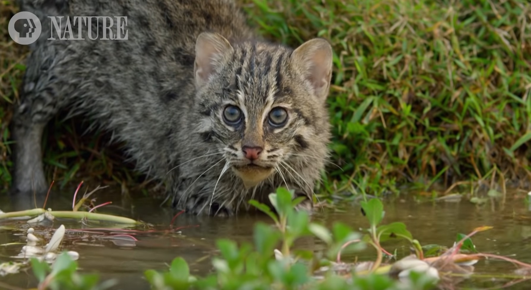 Fishing Kittens First Time In Water