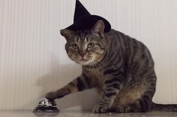 Cat Wearing Witch Hat Rings Bell To Get Food