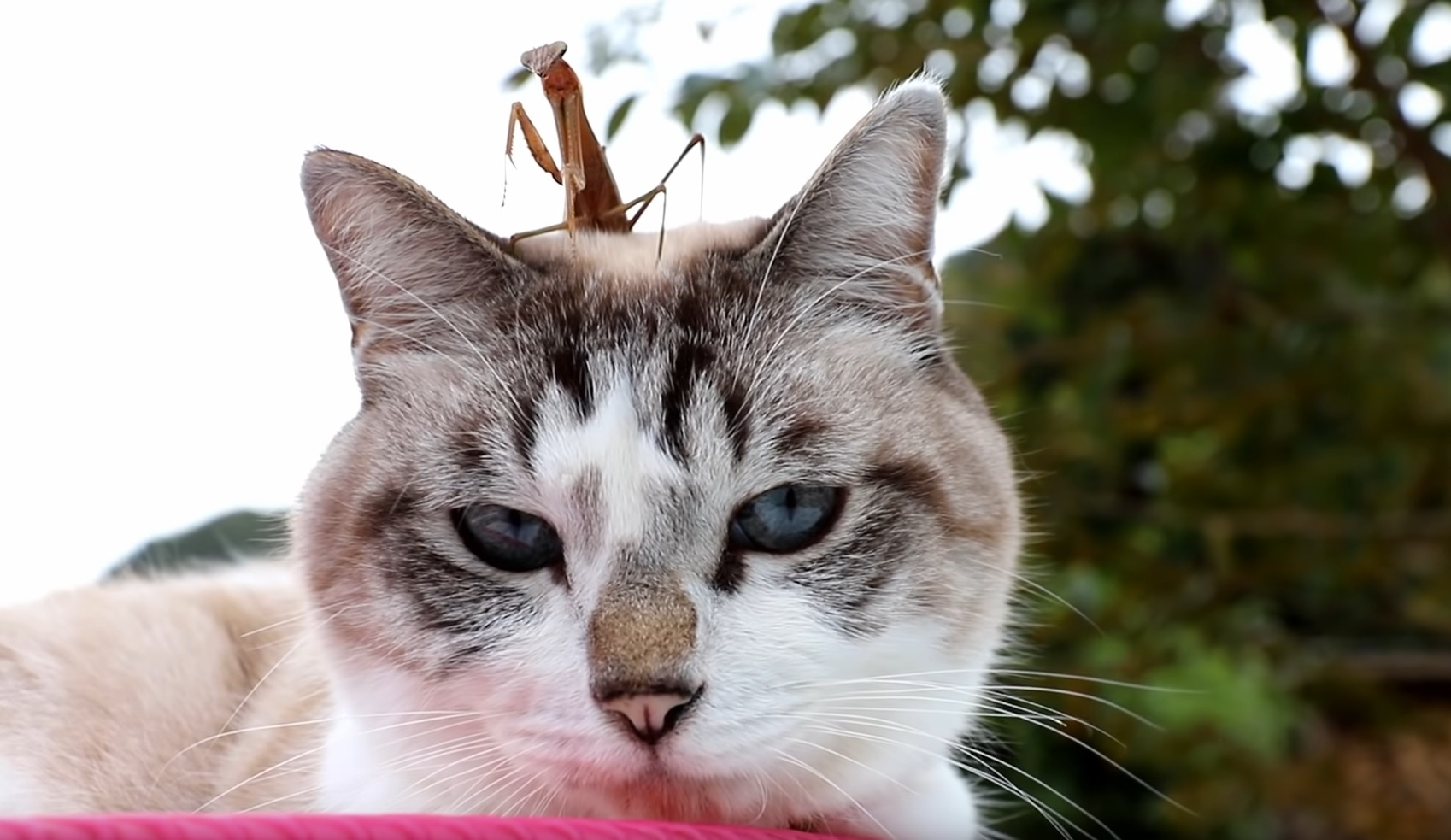 Cat And Mantis Friends