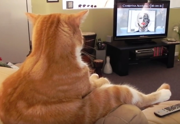 Funny Cat Sitting And Watching Tv