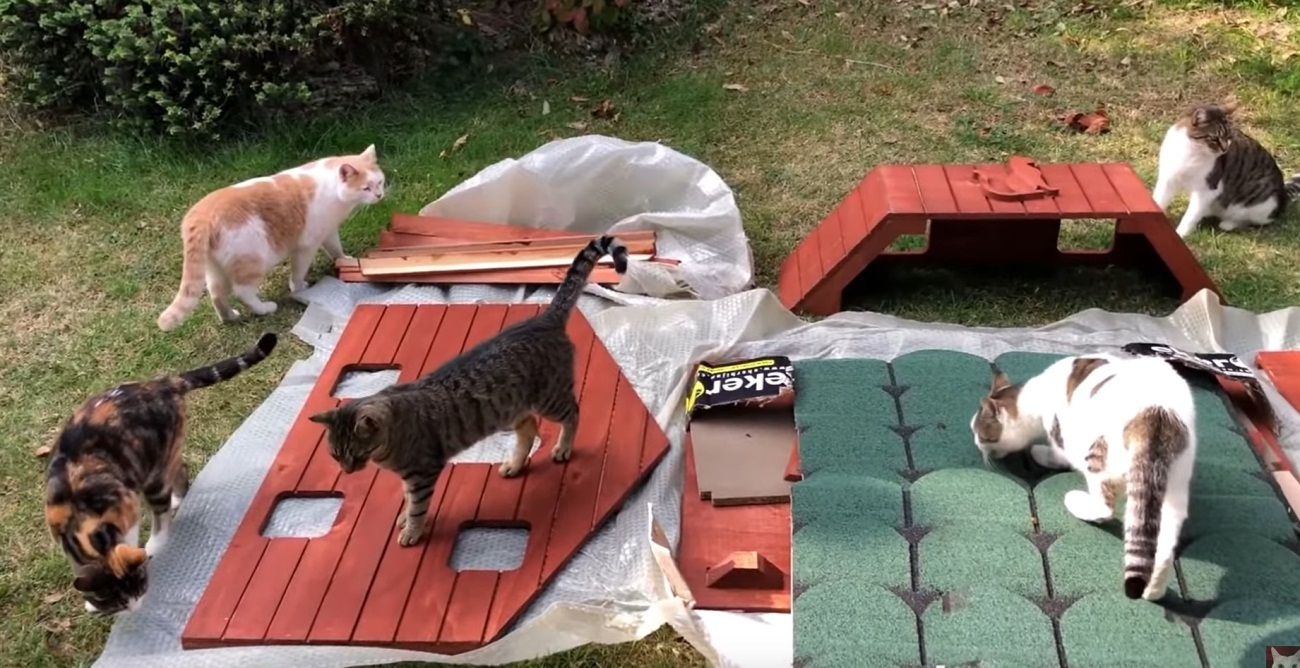 Building A House For His Cats