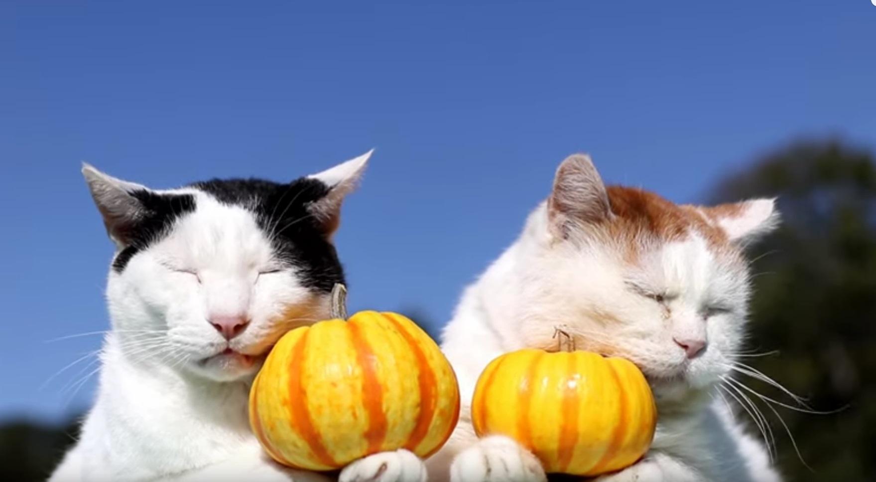 Pumpkin Kitties