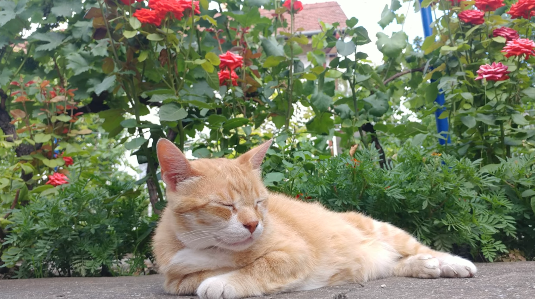 Gale Relaxes In Garden
