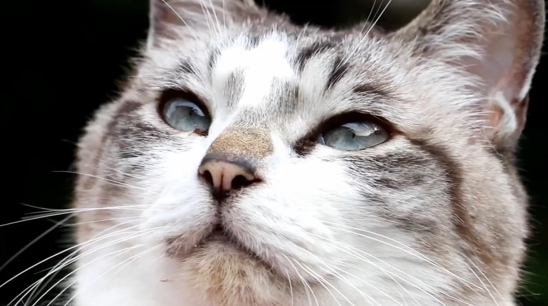 Closeup Cute Face