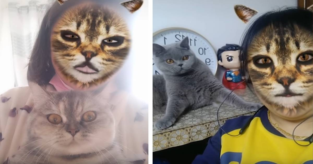 Funny Cats Reacting To Filter
