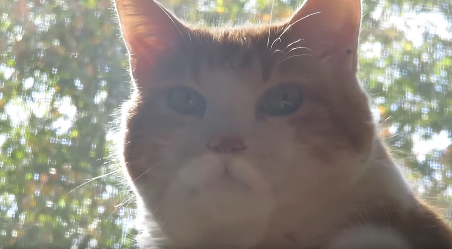 Butters The Holy Cat