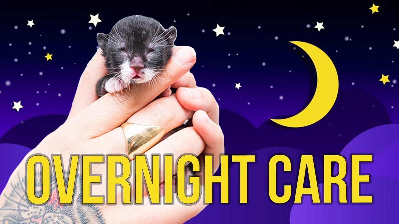 Tips on overnight care for foster kittens