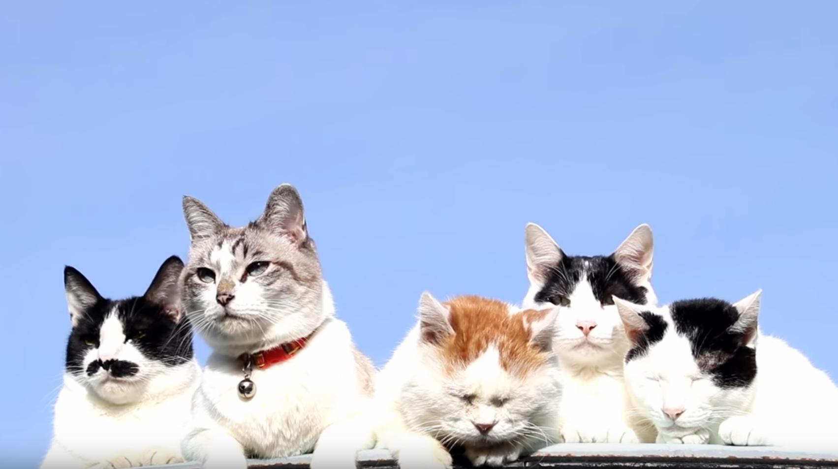 Shiro's Gang Enjoying The Caturday