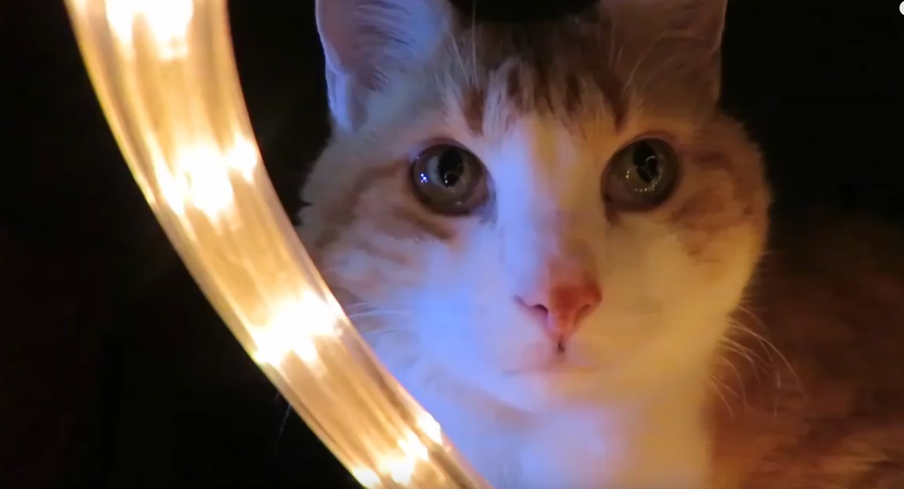 Butters Sits In Christmas Light