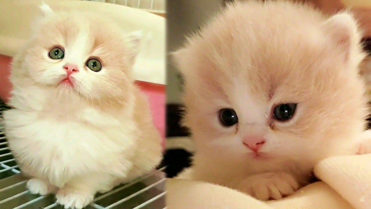 Cute Fuzzy Munchkin Kitty