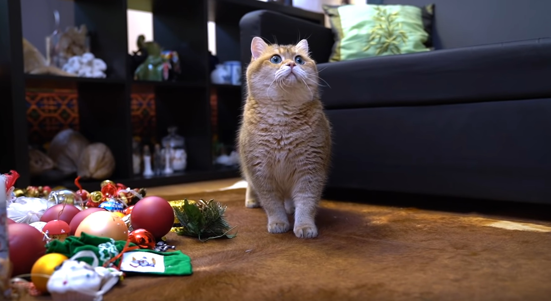 Hosico And The Christmas Tree