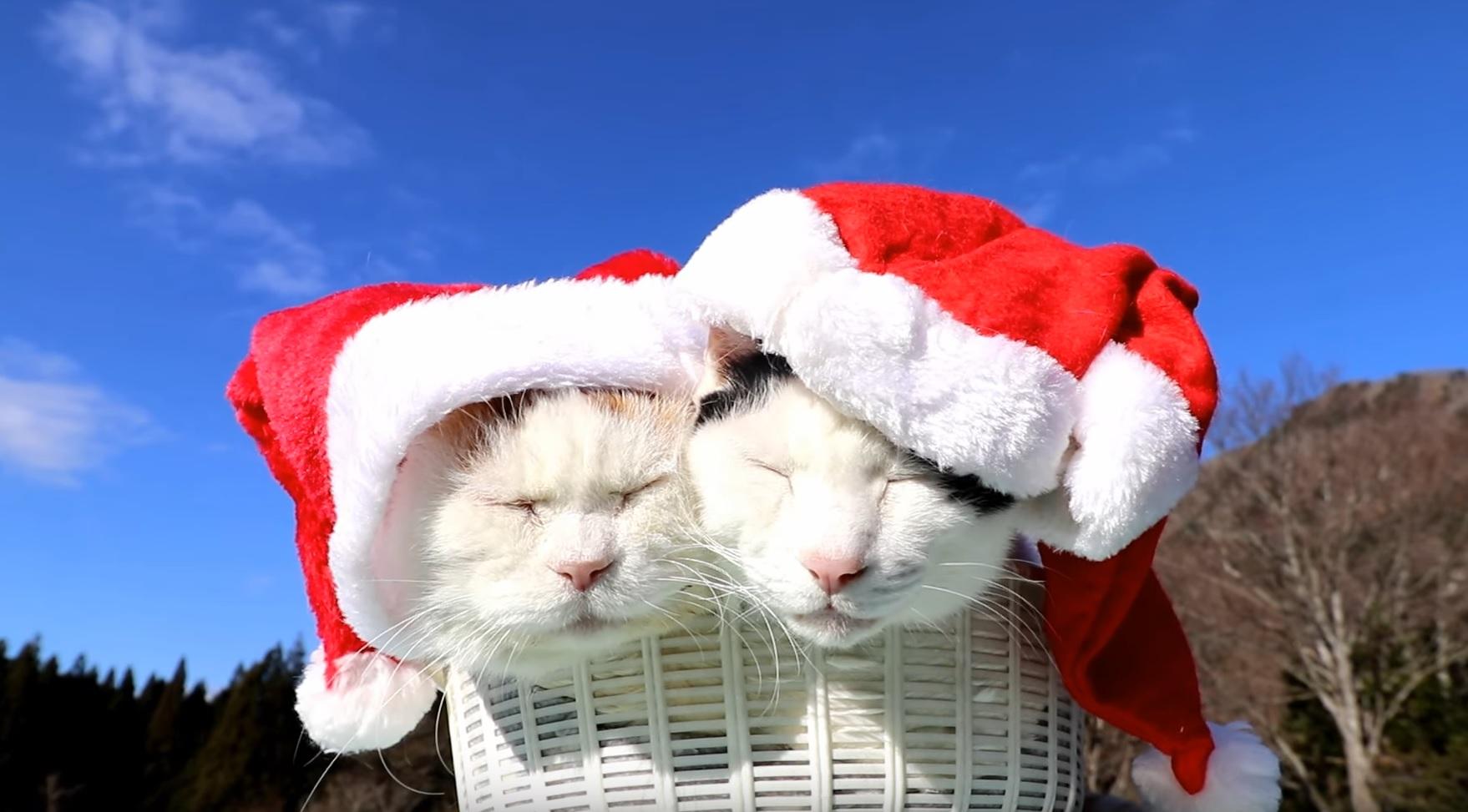 Merry Catmas Everyone