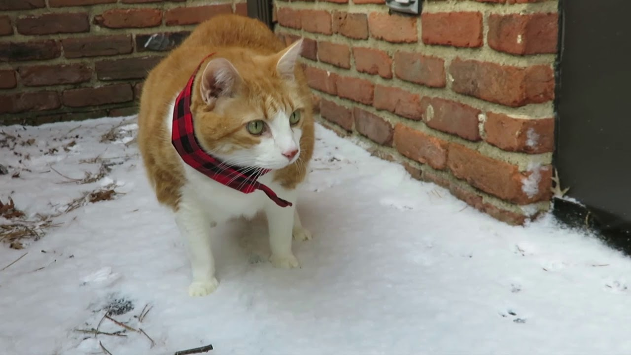 Butters Takes A Walk In The Snow