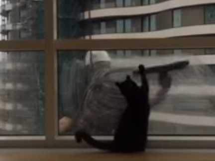 Cat Plays With The Windows Cleaner