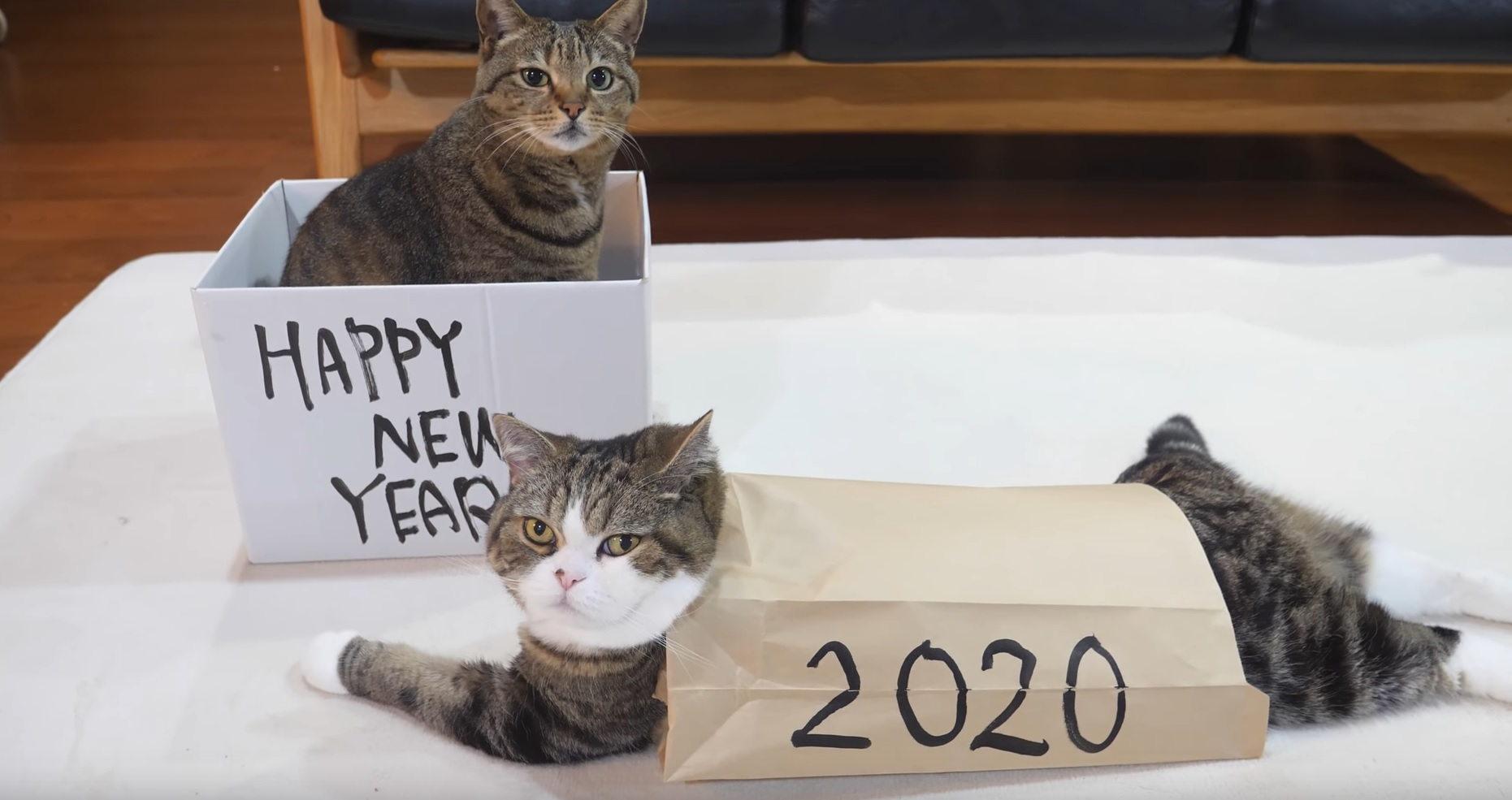 Happy New Year From Maru And Hana