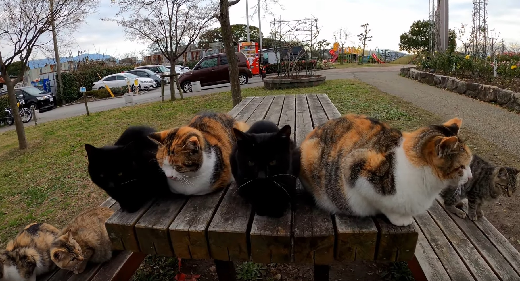 Kitty Gang In The Park