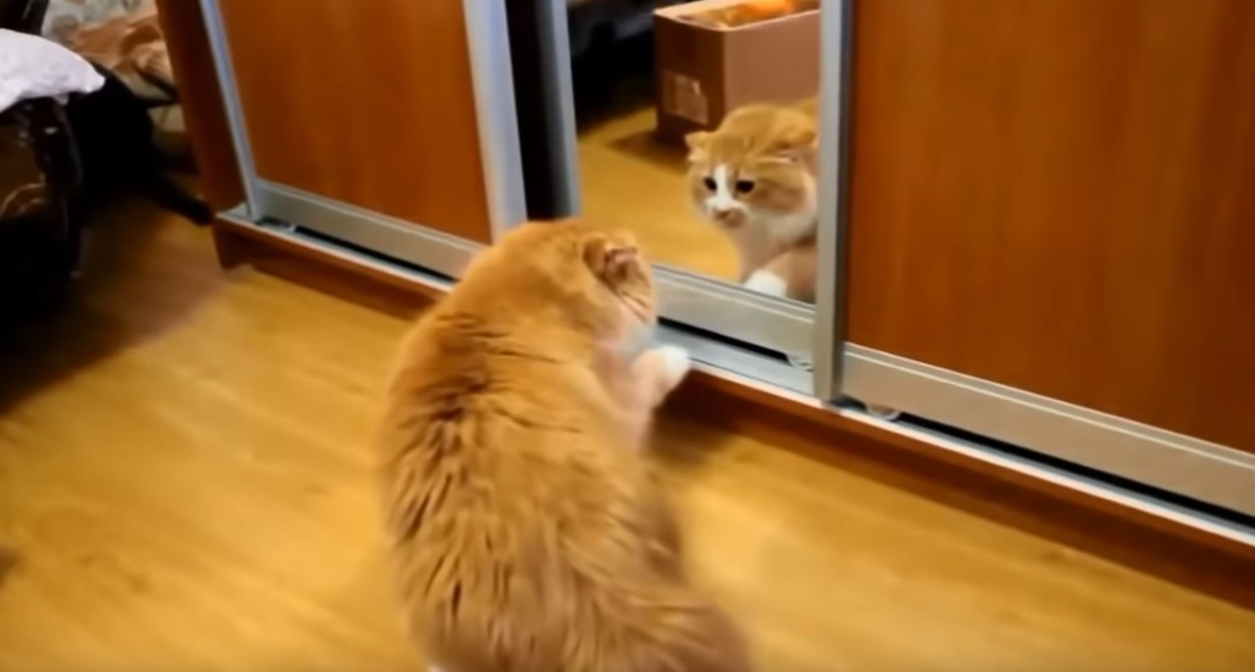 Cats Vs Mirrors Funny Compilation