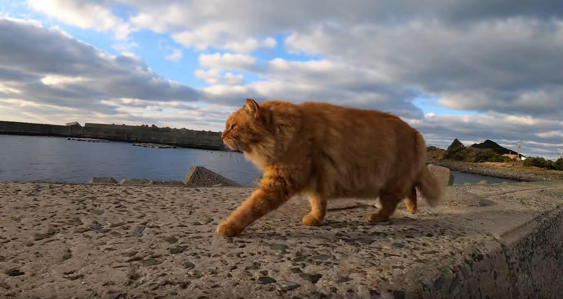 Cat Patrols The Fishing Port