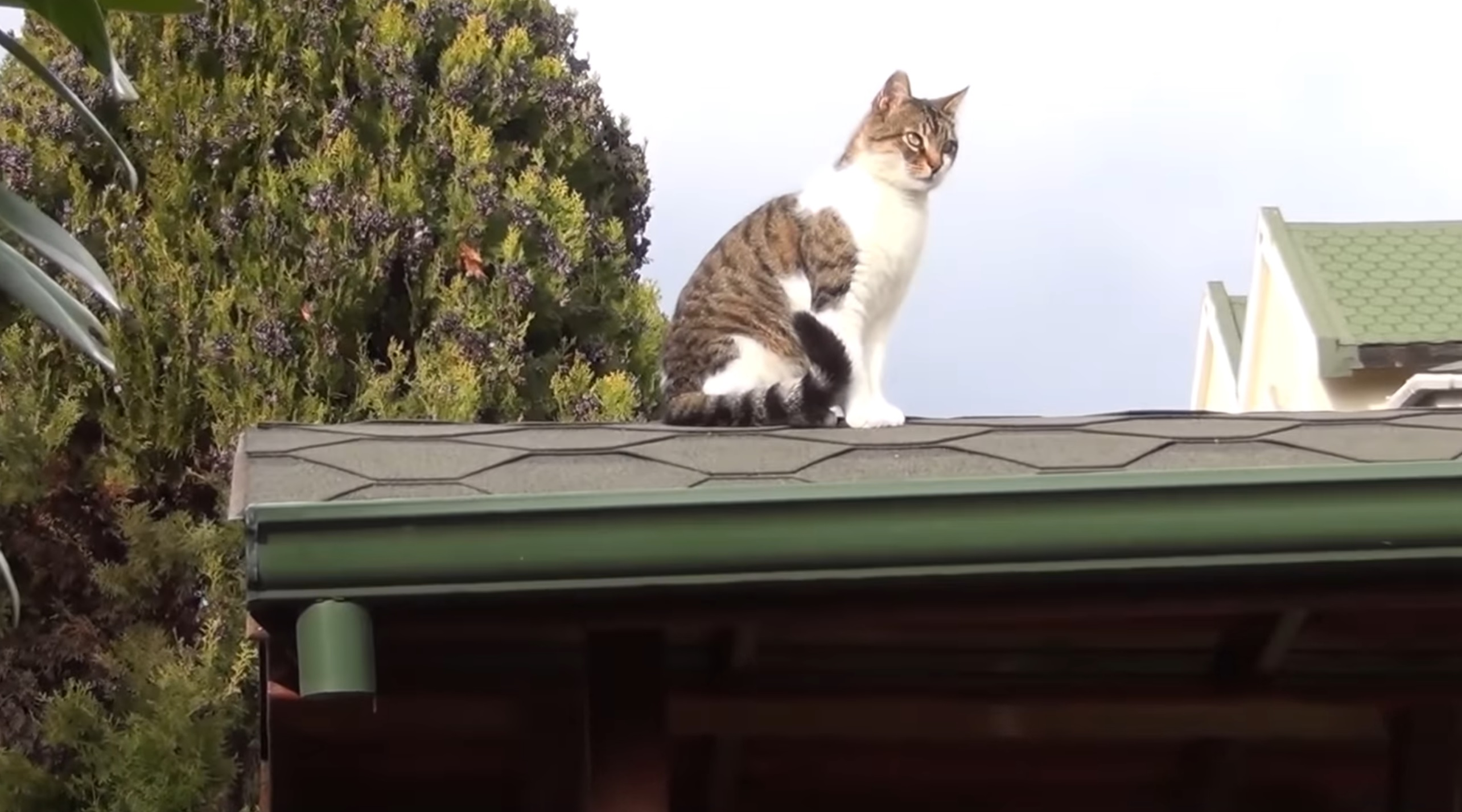 The Rooftop Kitty