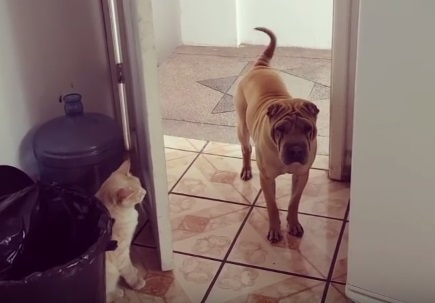 Cat Closes Door on Dog