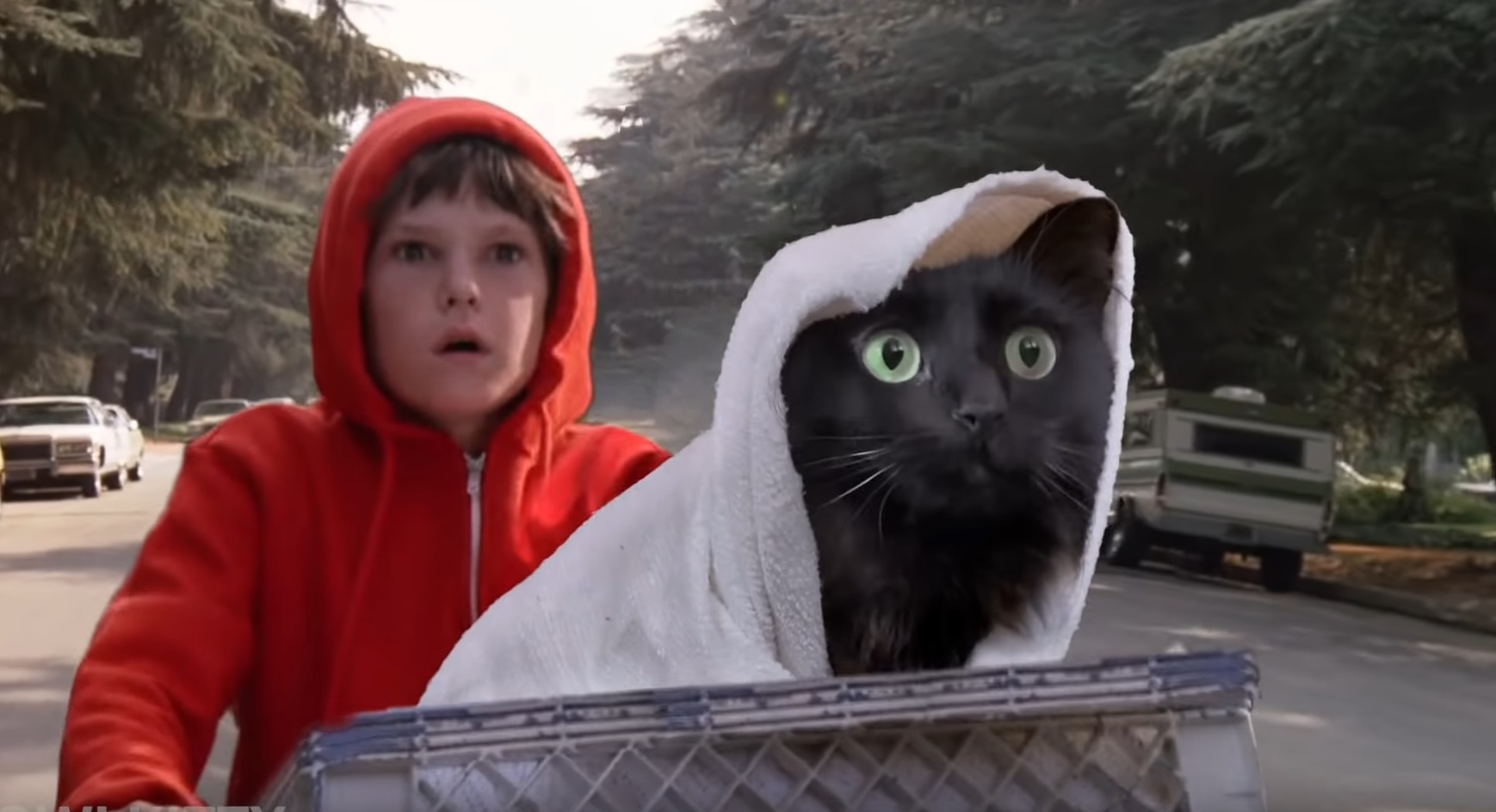 When You Take Your Cat To The Vet
