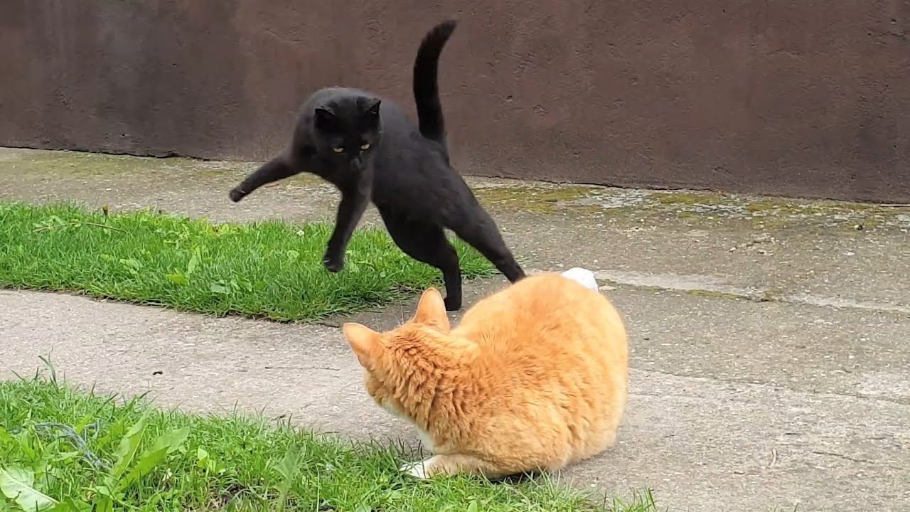 Playful Cats In The Garden