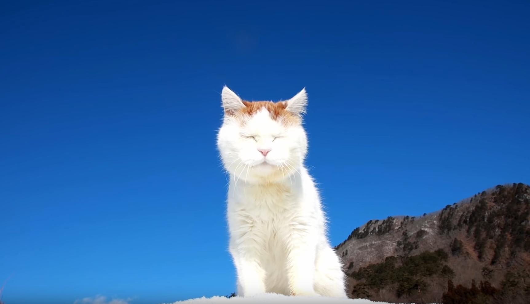 Shiro And The Blue Sky