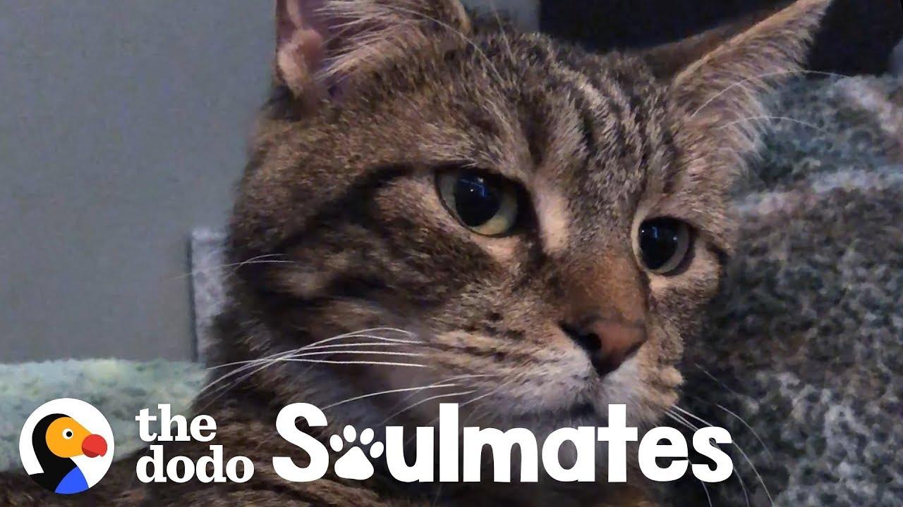 Family Welcomes Sick Stray Kitten
