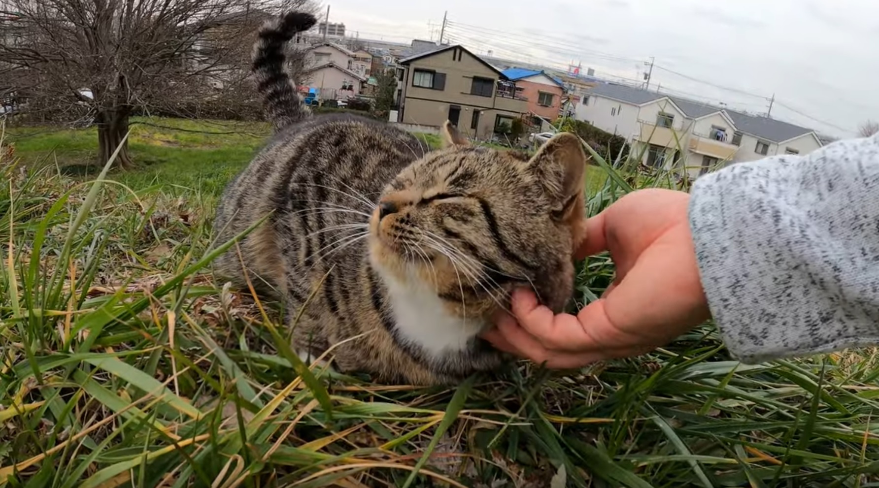 Friendly Cat Enjoys Being Pet