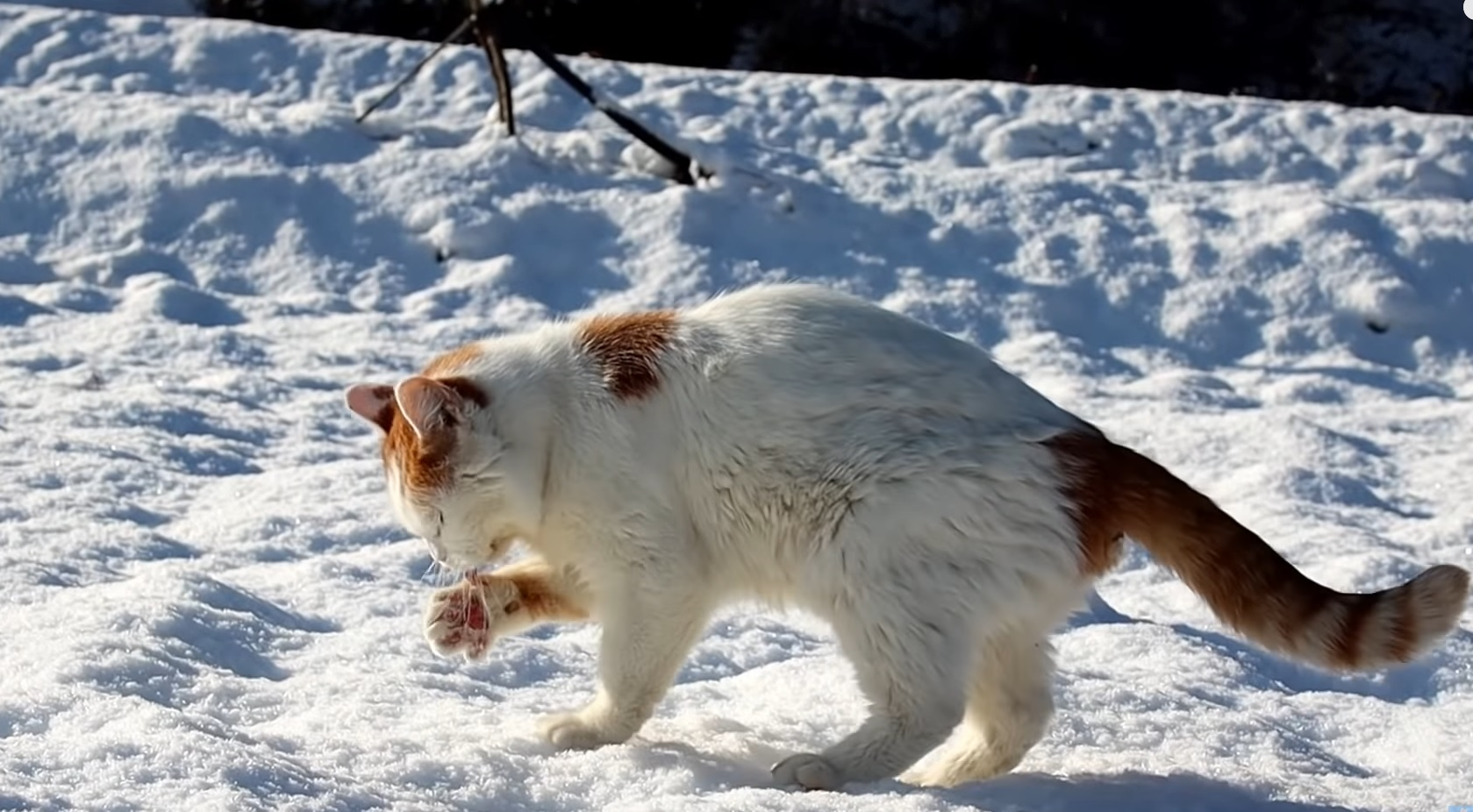 Taking A Walk In The Snow