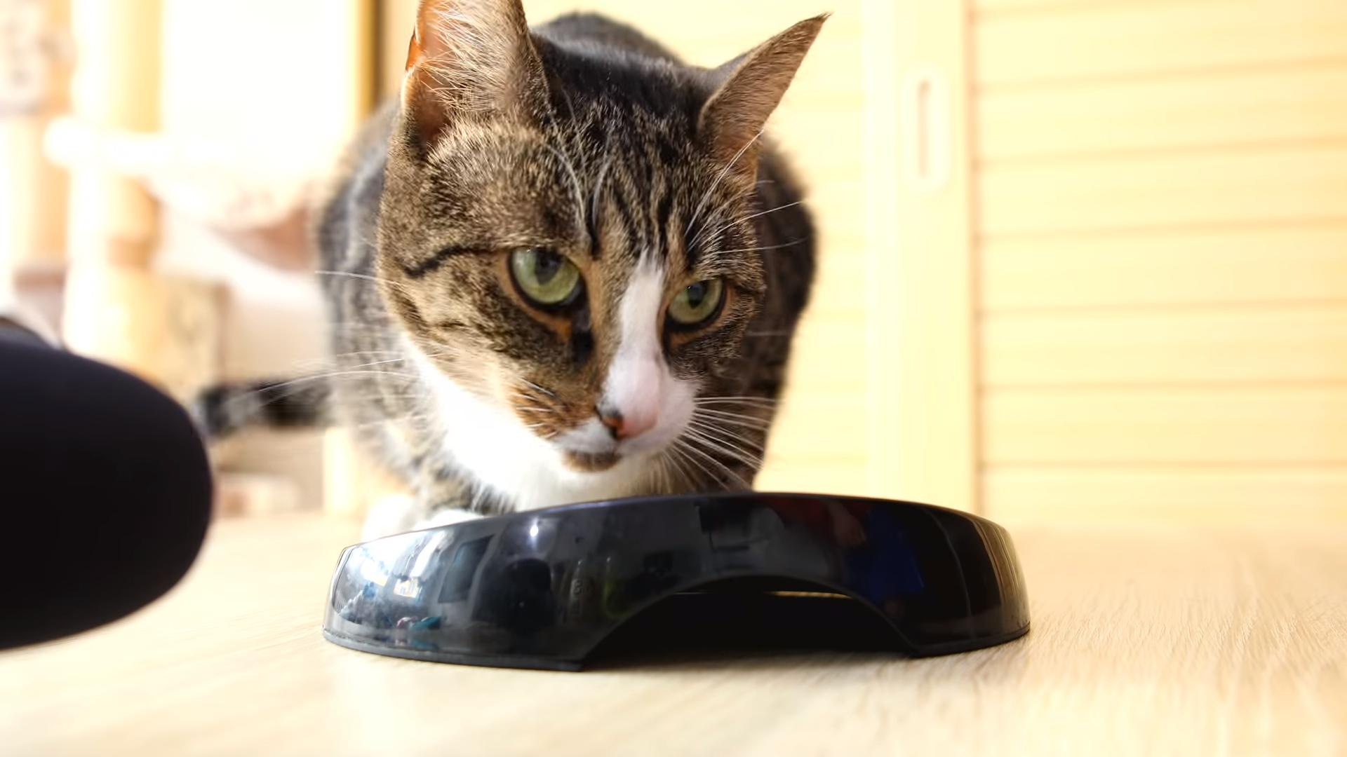ASMR - Cats Crunching & Munching