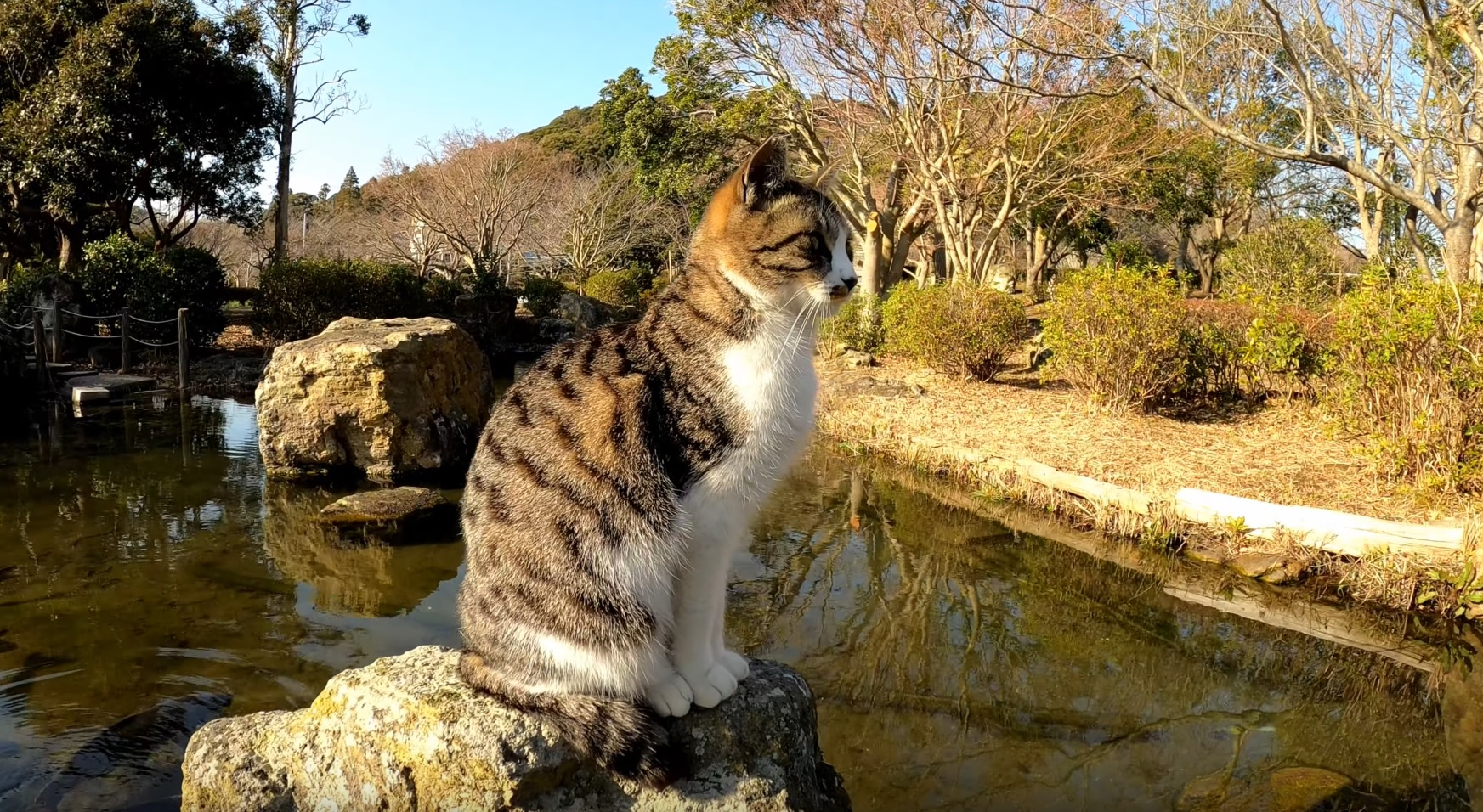 Supurrvising The Pond