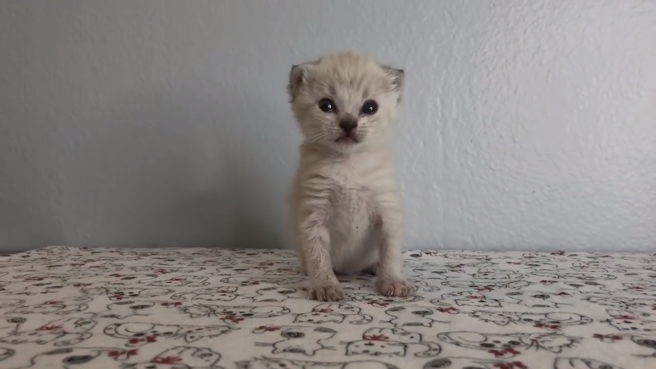 Tiny kittens learn how to walk