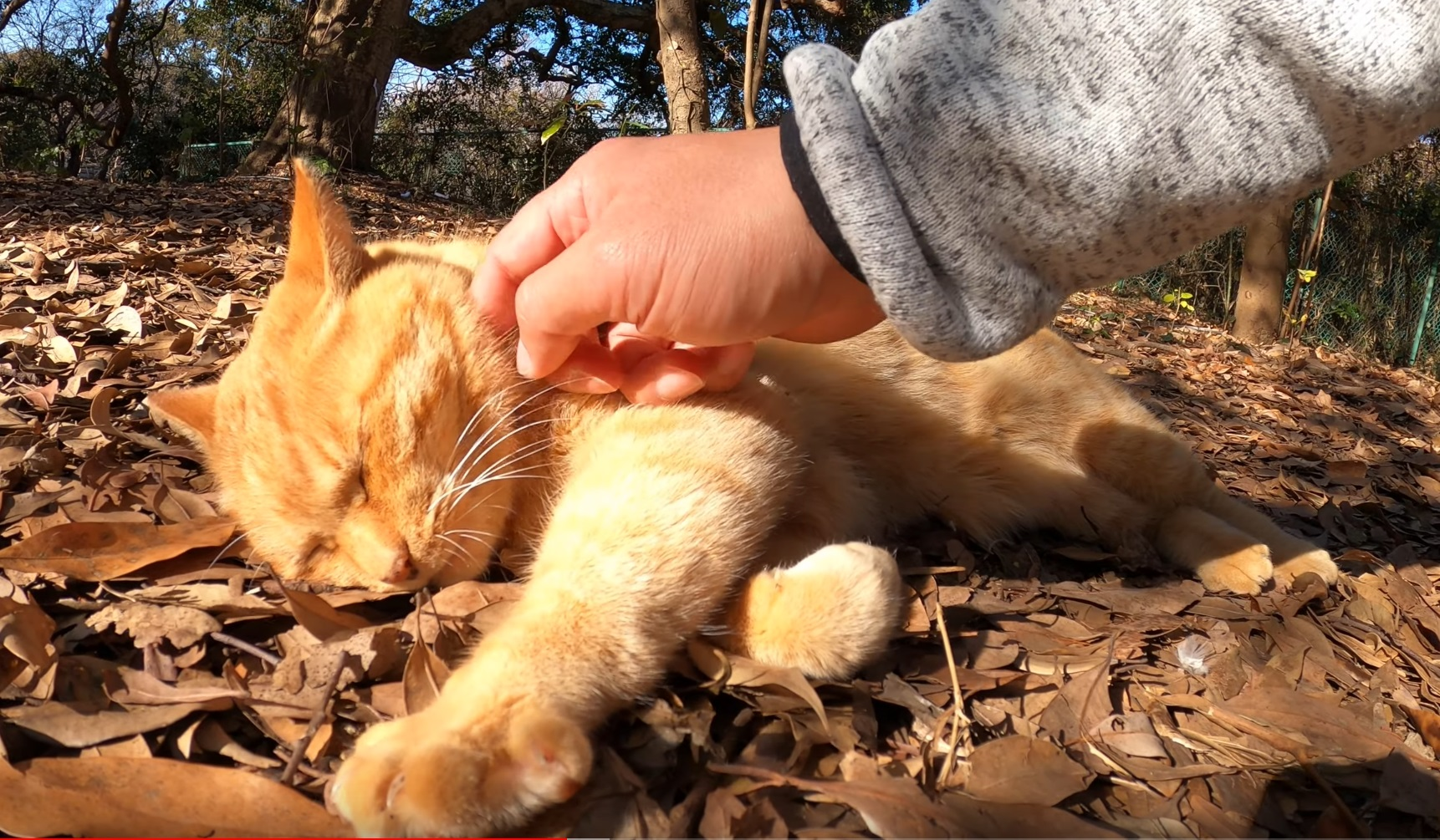 Cute Ginger Kitty Outside