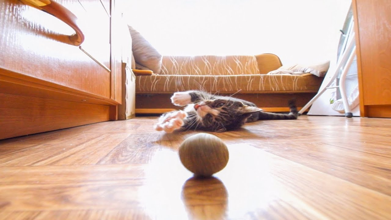 Cute, playful cat playing with catnip balls
