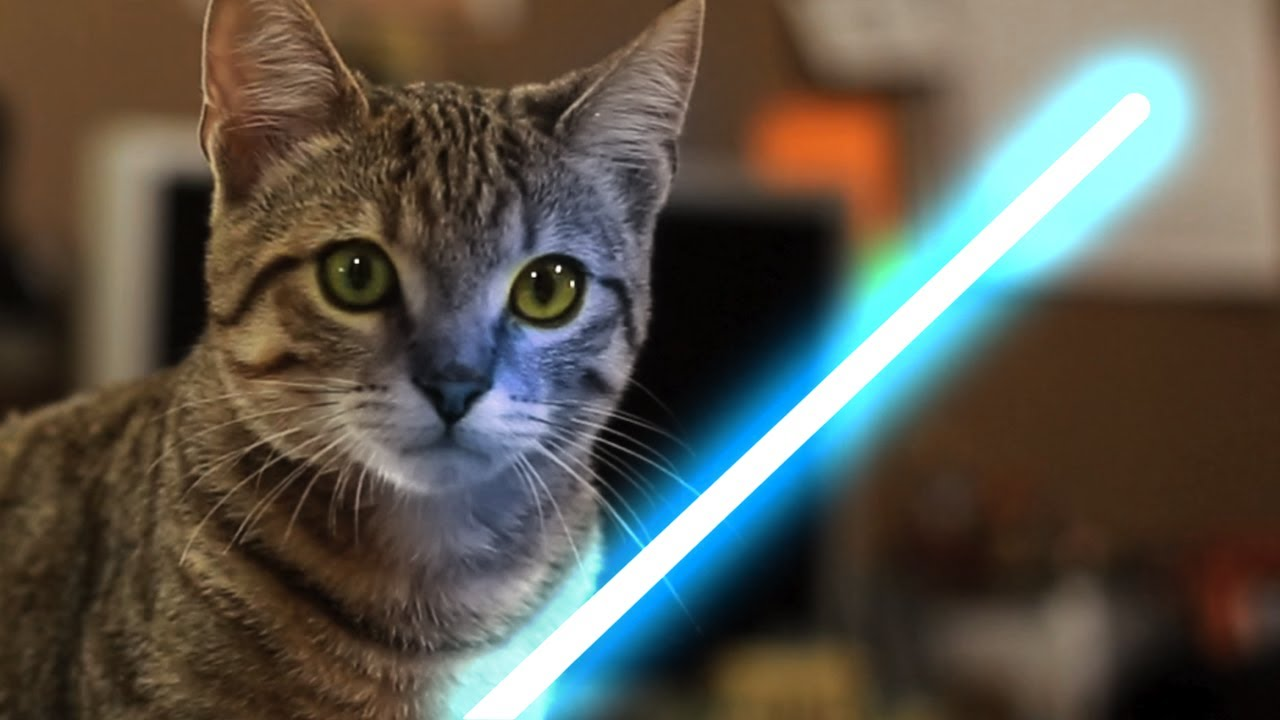 Jedi Kitten using The Force