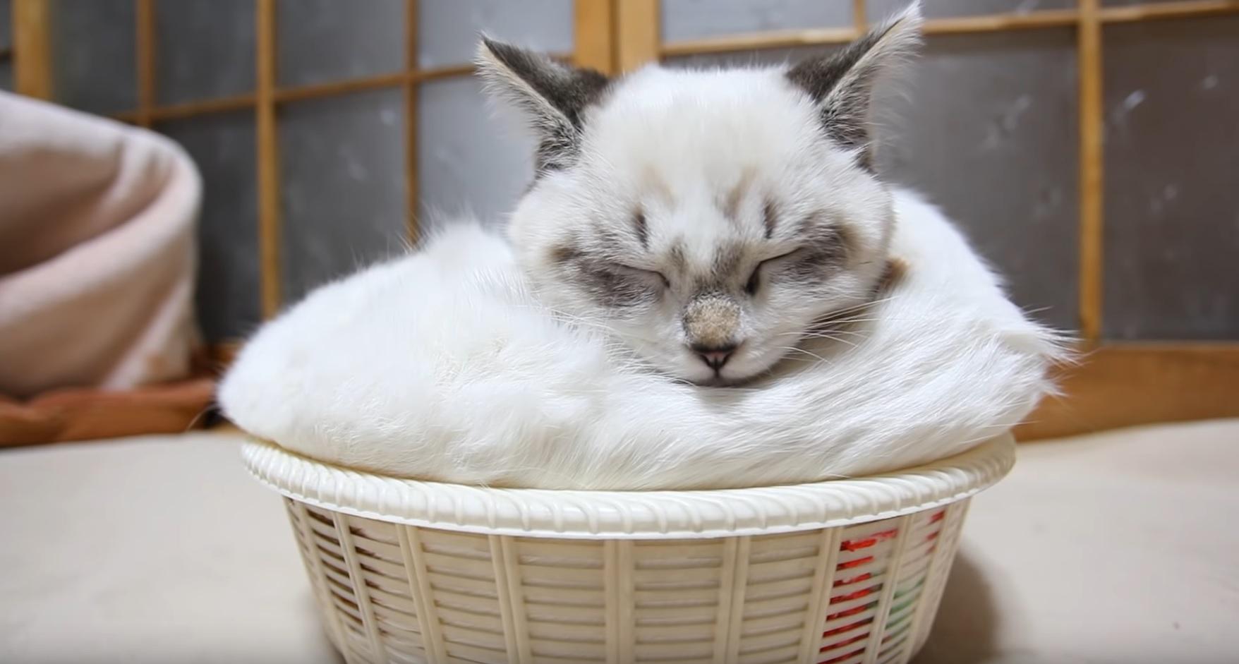 Two Kitties In Basket