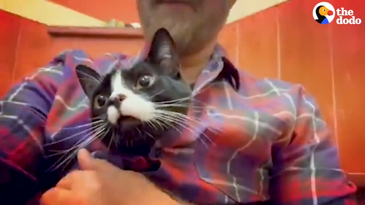 A guy risks his marriage by adopting a 3-Legged Cat
